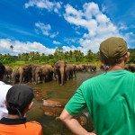 Visit to Pinnawala Elephant Orphanage