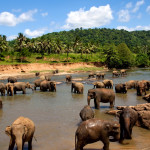 Elephant Orphanage Sri Lanka