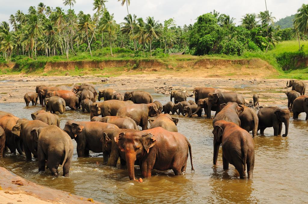 Pinnawala Sri Lanka  City pictures : Elephant Orphanage in Pinnawala | Travel Sri Lanka Blog