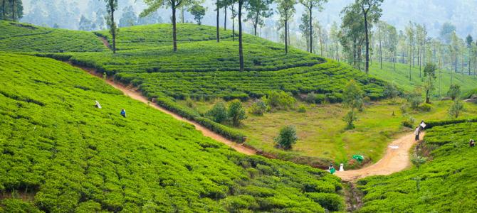 Hill Country in Sri Lanka