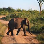 Elephant at Udawalawe National Park, Sri Lanka