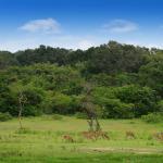 Herd of Deer in Sri Lanka