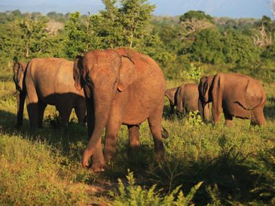 Wildlife Tour at Yala National Park