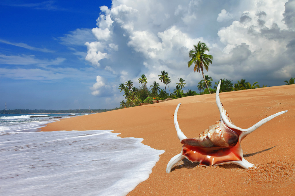Paradise Beach Hotel Sri Lanka