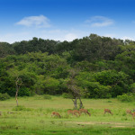 Herd of Deer in Sri Lanka