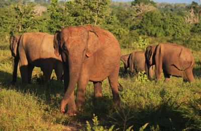 Wildlife Tour at Yala National Park