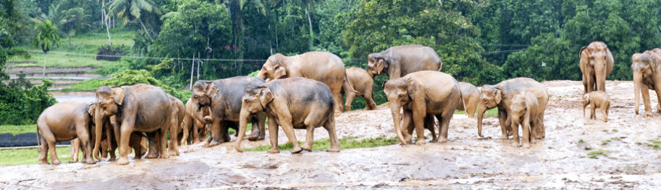Explore Sri Lanka - 18 Days 17 Nights Tour